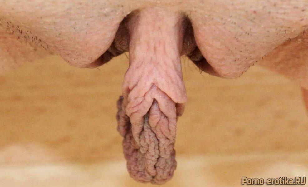 Длинные половые губы фото