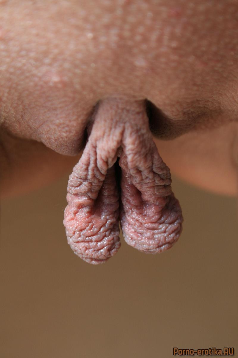 Анастасия малые половые губы крупно видеочате